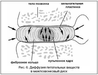 Диффузия питательных веществ
